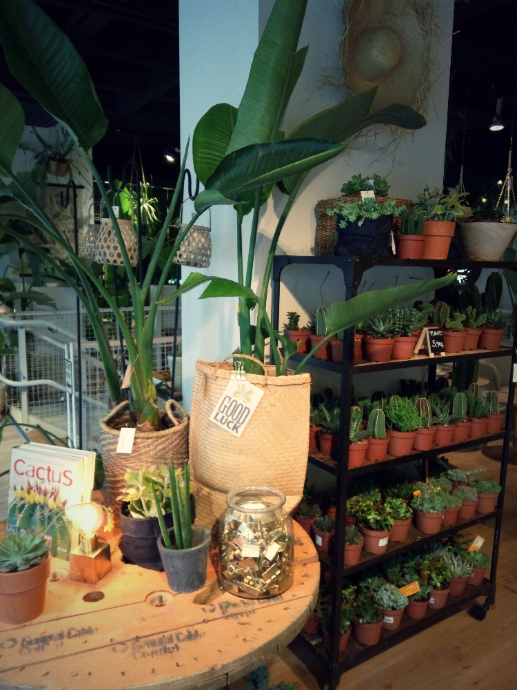 Plants collection in Natura