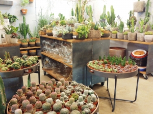 Cacto-Cacto plant shop in Chueca, Madrid
