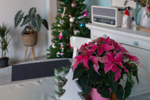 Christmas in my Barcelona living room